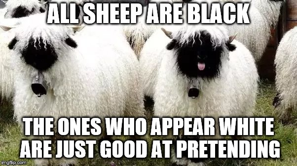 BLACK SHEEP VIII