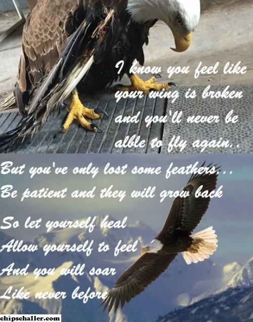 EAGLE SOARING MEME